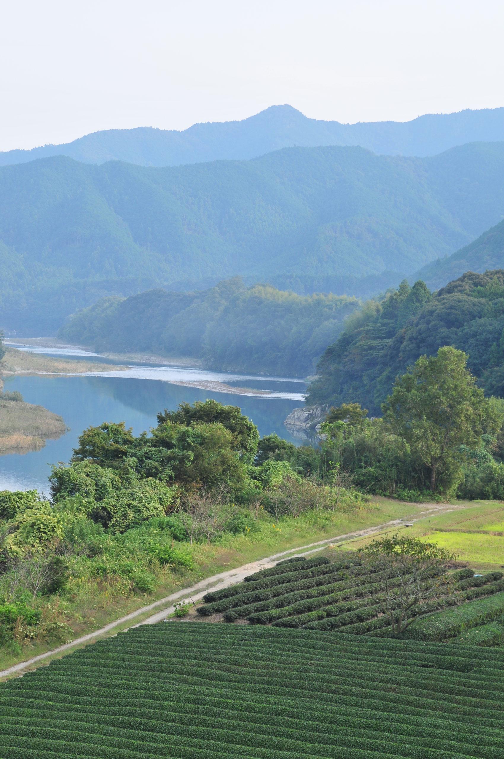 宮川と茶畑